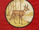 Bemis Bros. Calendar Lithograph &#8211; Pronghorn Antelope