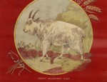 Bemis Bros. Calendar Lithograph &#8211; Mountain Goat