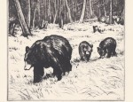 Olive Fell – Black Bear and Cubs