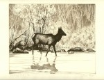 Olive Fell – Fording Elk