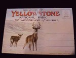 Yellowstone Souvenir Postcard Set