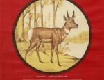 Bemis Bros. Calendar Lithograph – Pronghorn Antelope
